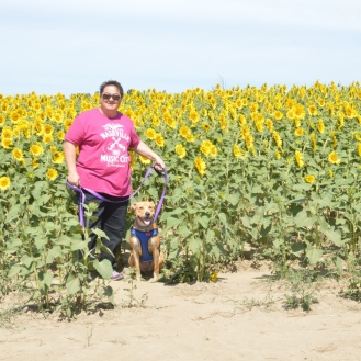 An acre of sunflowers